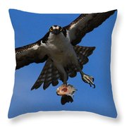Osprey In Flight Throw Pillow by Paul Marto