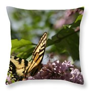 Papilio Glaucus   Eastern Tiger Swallowtail  Throw Pillow by Sharon Mau