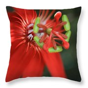Passiflora vitifolia Scarlet Red Passion Flower Throw Pillow by Sharon Mau