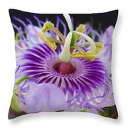 Passion Flora Throw Pillow by Juergen Roth