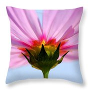 Pink Cosmos Throw Pillow by Rich Franco