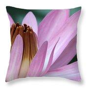 Pink Water Lily Macro Throw Pillow by Sabrina L Ryan