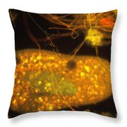 Plankton Throw Pillow by Eric V Grave