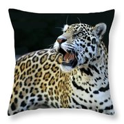 Play With Me Throw Pillow by Sabrina L Ryan