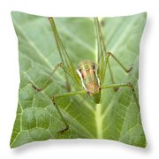 Portrait Of A  Cricket Throw Pillow by Cliff  Norton