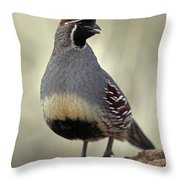 Portrait Of A Gambels Quail, Callipepla Throw Pillow by John Cancalosi