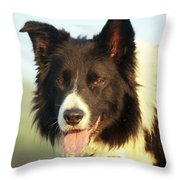 Portrait Of Indy Throw Pillow by Michael Haslam