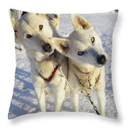 Portrait Of Two Husky Sled Dogs Throw Pillow by Paul Nicklen