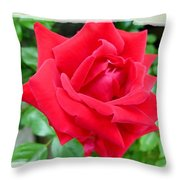 Prince Charles Rose Throw Pillow by Will Borden