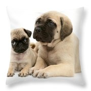 Pug And English Mastiff Puppies Throw Pillow by Jane Burton