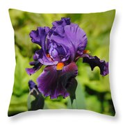 Purple And Orange Iris Flower Throw Pillow by Jai Johnson