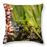 Radishes At The Market Throw Pillow by Heather Applegate