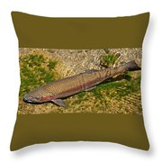 Rainbow Trout Throw Pillow by Nick Kloepping