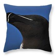 Razorbill Portrait Throw Pillow by Tony Beck