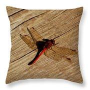 Red Dragon Fly Throw Pillow by LeeAnn McLaneGoetz McLaneGoetzStudioLLCcom