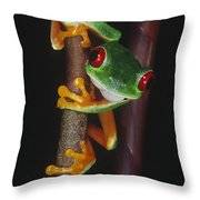 Red-eyed Tree Frog Agalychnis Callidryas Throw Pillow by Gregory G. Dimijian, M.D.
