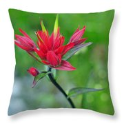 Red Indian Paintbrush Throw Pillow by Lisa Phillips