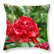 Red Rhododendron Floral Art Prints Rhodies Throw Pillow by Baslee Troutman