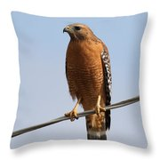 Red-shouldered Hawk . 7d10246 Throw Pillow by Wingsdomain Art and Photography