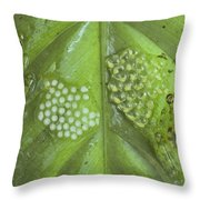 Reticulated Glass Frogs and Eggs Throw Pillow by Michael and Patricia Fogden
