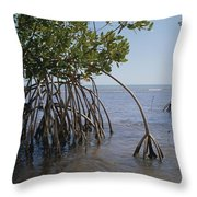 Root Legs Of Red Mangroves Extend Throw Pillow by Medford Taylor