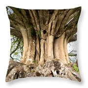 Roots Throw Pillow by Heiko Koehrer-Wagner