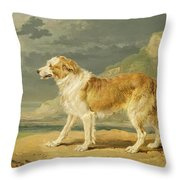 Rough-coated Collie Throw Pillow by James Ward