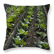 Rows Of Cabbage Throw Pillow by Anne Gilbert