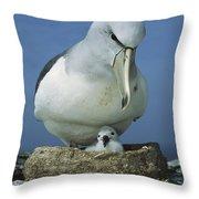 Salvins Albatross Thalassarche Salvini Throw Pillow by Tui De Roy