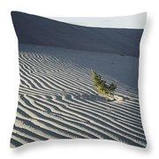Sand Dunes, Death Valley, California Throw Pillow by Marc Moritsch
