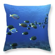 School Of Surgeonfish, Christmas Throw Pillow by Mathieu Meur