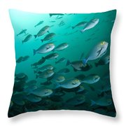 School Of Yellow Masked Surgeonfish Throw Pillow by Mathieu Meur