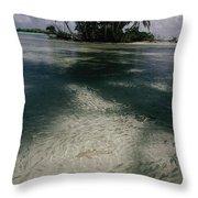 Schools Of Mulletfish Mugilidae Throw Pillow by Randy Olson