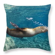 Sea Lion Blowing Bubbles, Los Islotes Throw Pillow by Todd Winner