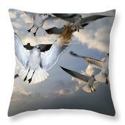 Seagulls In Flight Throw Pillow by Natural Selection Ralph Curtin