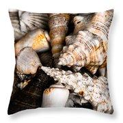 Seashells Throw Pillow by Hakon Soreide