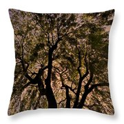 Shady Tree ... Throw Pillow by Juergen Weiss