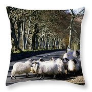 Sheep On The Road, Torr Head, Co Throw Pillow by The Irish Image Collection