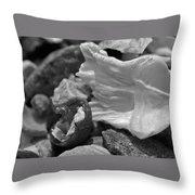 Shells Vi Throw Pillow by David Rucker