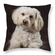 Shih Tzu-poodle On A Brown Muslin Throw Pillow by Corey Hochachka