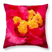 Show Off Throw Pillow by Rich Franco