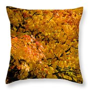 Showing Off Throw Pillow by Rich Franco
