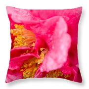 Shy Camellia Throw Pillow by Rich Franco