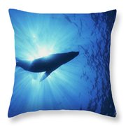 Silhouette Of A Sea Lion, La Paz Throw Pillow by Beverly Factor