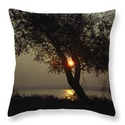 Silhouette Of Willow Tree At Sunset Throw Pillow by Al Petteway
