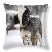 Sled Dog Howling Throw Pillow by Pete Ryan