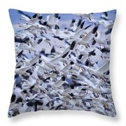 Snow Geese Chen Caerulescens Fly Throw Pillow by Ralph Lee Hopkins