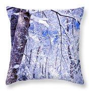 Snowy Path Throw Pillow by Rob Travis