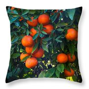So Sweet Throw Pillow by Robert Bales