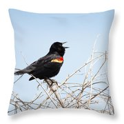 Song Of A Red-winged Blackbird Throw Pillow by Ellie Teramoto